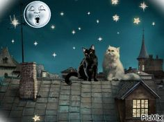 Animals wallpapers full hd, hdtv, fhd, desktop backgrounds hd, pictures and images Good Night Cat, Cute Good Night, Stars At Night, Stars And Moon, White Persian Kittens, White Cats, Night Gif, Sky Night, Cute Cartoon Images