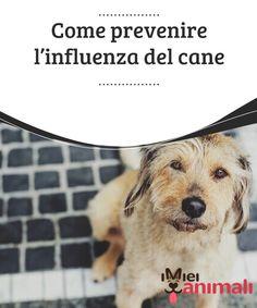 Come prevenire l'influenza del cane  I #cambiamenti #climatici influenzano i nostri #cuccioli portandoli a raffreddarsi o perfino a prendere l'influenza, cosa che li #debilita. #Salute