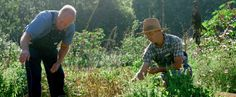 Blackberry Farm: August Harvest Time