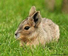 [konijn.jpg]