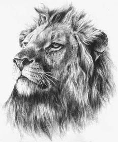 Tribal lion tattoo designs for men and women. Traditional lion tattoo ideas of different sizes, shapes and colors. Small lion tattoos made on different body parts. Lion King tattoo - Lion head tattoo - Lion of Judah tattoo - Lion chest tattoo - Lion face. Lions Tattoo, Lion Head Tattoos, Mens Lion Tattoo, Leo Tattoos, Elephant Tattoos, Cat Tattoo, Tattoo Drawings, Sleeve Tattoos, Girl Tattoos