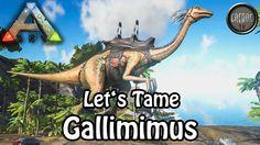 Ark Survival Evolved - Let's Tame: Gallimimus (deutsch)