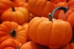 4 Pumpkin-Inspired Dessert Recipes | The Dolce Diet