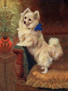 POMERANIAN CHARMING LITTLE DOG PRINT MOUNTED READY TO FRAME