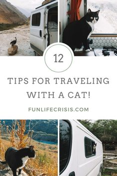 31 Rv Cats Ideas Rv Cat Rv Cats