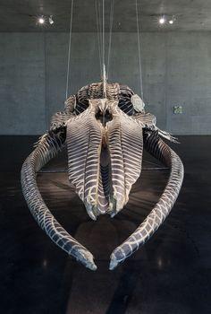 Dark Wave (Installation view), 2006 Visión frontal del esqueleto de ballena de Gabriel Orozco (© Gabriel Orozco. Courtesy of the artist and Marian Goodman Gallery, New York. Photo: Markus Tretter/Kunsthaus Bregenz)  Ver más en: http://www.20minutos.es/fotos/artes/el-movimiento-natural-de-gabriel-orozco-10197/#xtor=AD-15&xts=467263
