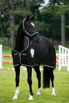 Sublime 23 A beautiful charismatic horse https://meowlogy.com/2018/02/13/23-beautiful-charismatic-horse/ To a lot of men and women, horses are just beautiful creatures.