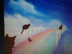 Cat's on the rainbow bridge