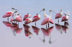 Birds of a Feather... - Photograph at BetterPhoto.com
