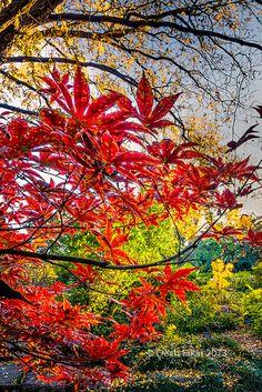 ✯ Fall Colors سبحان الله وبحمده ،، سبحان الخالق المصور !!