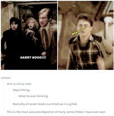 Harry no! Harry yes! Harry Potter Marauders, Harry Potter Tumblr, Harry James Potter, Harry Potter Jokes, Harry Potter Pictures, Harry Potter Universal, Harry Potter Fandom, Harry Potter World, No Muggles
