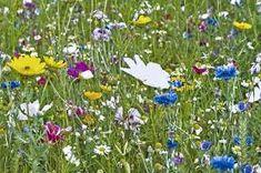 Znalezione obrazy dla zapytania łąka alpejska