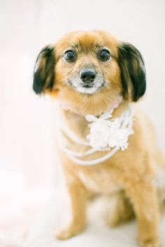Such a cute wedding pup!