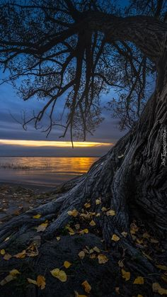 Jesienne drzewo na brzegu jeziora - Tapeta na telefon Apple Wallpaper, Nature Wallpaper, Iphone Wallpaper, Scenery, Mobiles, Beach, Easy Jet, Cheap Flight Tickets, Amazing