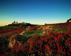 Beautiful Maltese landscape! │ #VisitMalta visitmalta.com