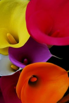 colorful lilies...I have some dark purple ones in my living room