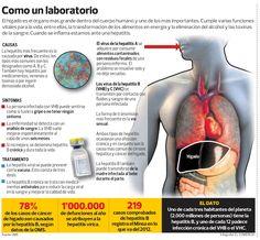 El hígado #infografia