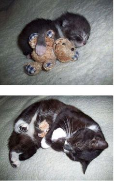 The top photo is a baby kitty with his teddy bear. The bottom photo is the same kitty, with his same bear. My heart just melted...