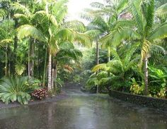 Love the Privacy of this Tropical Driveway with stone stacked walls