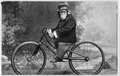 A well dressed chimpanzee on a vintage bicycle.
