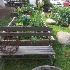 The garden has never been so green. #fiorefarm #fioregarden #fioremarketcafe #ilgiardino
