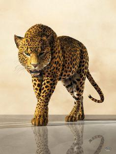 Leopard by deskridge on DeviantArt