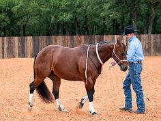 Training Tip of the Week: Every horse is capable of being a willing, safe and respectful partner Downunder Horsemanship | January 2013