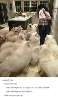 34 Samoyed Saturday Dog Samoyed Photos Who doesnt love cute dogs and are some of the cutest. Funny Animal Pictures, Funny Animals, Cute Animals, Animal Pics, Funny Photos, Dog Pictures, Cute Puppies, Dogs And Puppies, Doggies