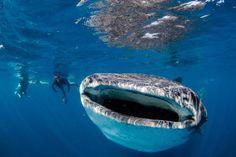 Largest Living Sea Creatures