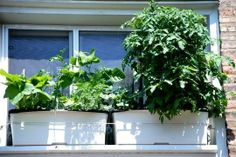 Window sill vegetable gardening...