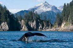 kenai national park cruise   Kenai Fjords Tours also offers three more seasonal cruise options ...