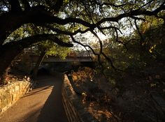 Austin's Shoal Creek wends through the heart of the city. Hikers, birders, bikers, and joggers start at Lady Bird Lake and continue up the creek for several miles. Pease Park, the oldest park in Austin, is situated about half way up the creek.