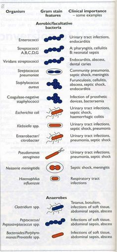 Bacteria and their significiant - bio - Bildung Biomedical Science, Science Biology, Forensic Science, Teaching Biology, Life Science, Computer Science, Medizinisches Labor, Medical Lab Technician, Medical Laboratory Scientist