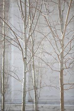 Les couleurs de l'hiver /Martine Haddouche/