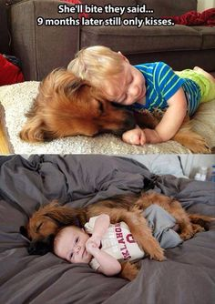 I am proud to say this is way to cute. I want my dog to do this with one of my kids one day.