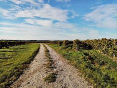 It was a lovely weekend for a #bikeride through the #vineyards around #Jonzac ! 🇫🇷🚴♂️🍂 To enjoy some Autumn #cycling contact Chris at @BikeHireDirectFrance #CharenteMaritime ... head to link in bio 🙂 🇫🇷🚴♂️🍂 #NouvelleAquitaine #France #BikeHireDirect #DispoVelo #vigne #Cognac #Pons #Saintes #Automne #velo #bike #velo #cyclisme #cyclinginFrance #cyclismeenFrance