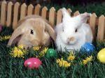 Easter bunnies.