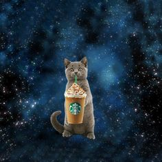 Starbucks Releases 21 Branded Frappuccino GIFs With Popkey App Adweek Wild Rice Salad, Unicorn Fashion, Galaxy Cat, Starbucks Drinks, Space Cat, Crazy Cats, Cat Love, Animated Gif, Storytelling