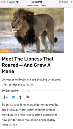 Get it girl. http://voices.nationalgeographic.com/2012/10/09/weird-wild-rare-maned-lionesses-explained/