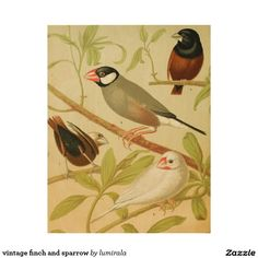 vintage finch and sparrow wood wall art
