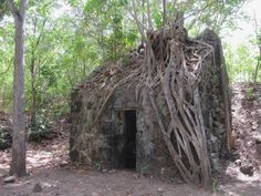 The ruins of an century French battery and gunpowder store are hidden in the forest at Pointe Burgos on Morne Champagne, Les Anses d'Arlet, Martinique, Eastern Caribbean. 18th Century, Caribbean, Champagne, French, Store, Tent, French Language, Shop Local, Shop