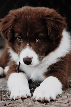 Cute Baby Dogs, Super Cute Puppies, Baby Animals Super Cute, Cute Little Puppies, Cute Dogs And Puppies, Cute Little Animals, Cute Funny Animals, Doggies, Baby Animals Pictures