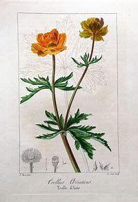 Image result for Vintage Botanical Illustrations