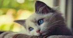 Erhalte dir die Zuneigung und Liebe deiner Katze