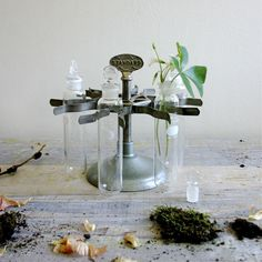 use as centerpiece. apothecary jars would be cool too