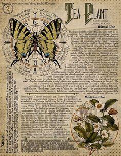 Papel Vintage, Vintage Ephemera, Vintage Paper, Herbal Magic, Magic Herbs, Grimoire Book, Wiccan Magic, Vintage Newspaper, Pics Art