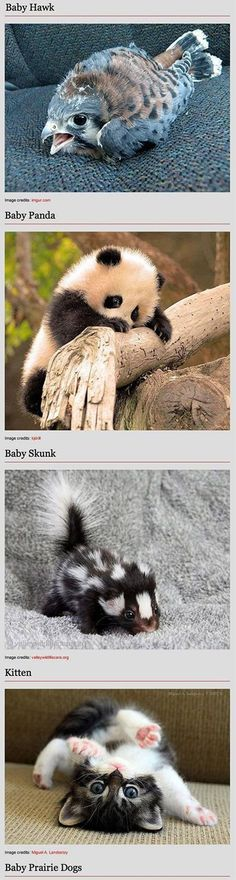 Baby animals can't be cuter...
