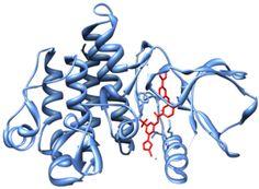 Tyrosine-kinase inhibitor - Wikipedia, the free encyclopedia