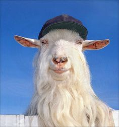 Bill Goat Different Types, Goats, Animals, Collection, Animais, Animales, Animaux, Animal, Goat