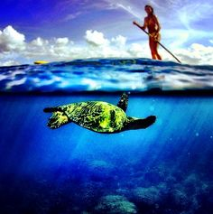 Stand Up Paddle with Turtles #Hawaii